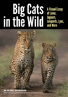 Big Cats In The Wild A Visual Essay of Lions, Jaguars, Leopards, Pumas, and More